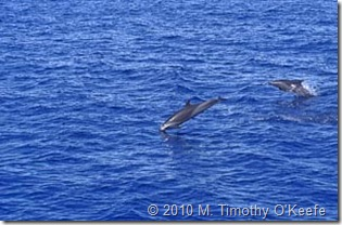 dominica whales-6