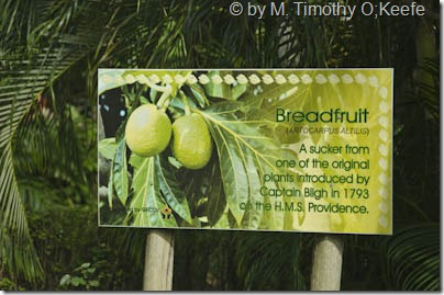 St Vincent breadfruit sign-1