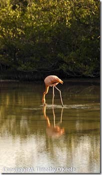 Bachas flamingo-1 blog