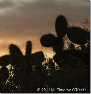 Cactus_Las_Bachas -1