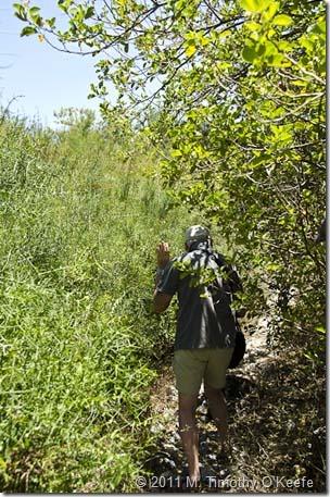 Urbina overgrown trail-1