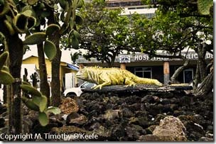 Santa Cruz iguana statue-1blog