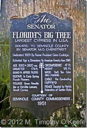 Florida The Senator Largest Cypress in USA sign