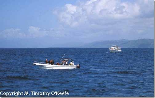 Humpback whale watching boats tourists Samana Peninsula Dominican Republic